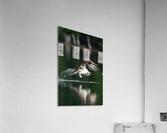 Wesley Allen Shaw 00898  Acrylic Print