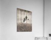 Wesley Allen Shaw 02112  Acrylic Print