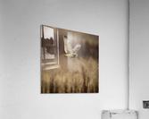 Wesley Allen Shaw 02133  Acrylic Print