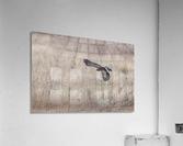 Wesley Allen Shaw 09335  Acrylic Print