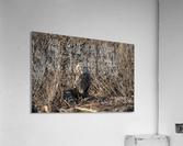Wesley Allen Shaw 09496  Acrylic Print