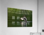 Wesley Allen Shaw 09988  Acrylic Print
