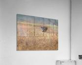 Wesley Allen Shaw 03939  Acrylic Print