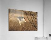 Wesley Allen Shaw 08859  Acrylic Print