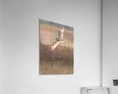 Wesley Allen Shaw 08970  Acrylic Print