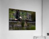 Wesley Allen Shaw 04816  Acrylic Print