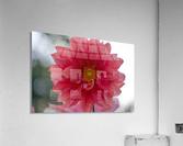 20181021 DSC 0037  2   Acrylic Print