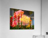 20181121 IMG 2684  Acrylic Print