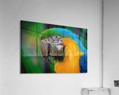 20181021 DSC 0292  2  1  Acrylic Print