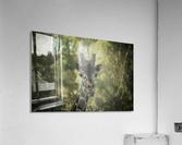 20181104 DSC 0164  3   Acrylic Print