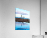 20190228 DSC 0078 2  Acrylic Print