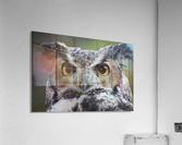 Owl  5  Acrylic Print