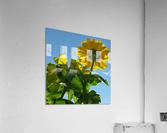 Summer Sky Flowers 8 AUG 2020  Acrylic Print