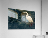 Great White Egret ap 1839 B&W  Acrylic Print