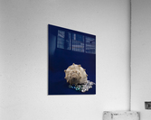 Spiral Conch Shell With Colored Glass  Acrylic Print