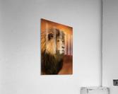 Lion Legacy - Lion Art by Jordan Blackstone  Acrylic Print