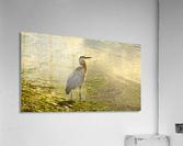 Blue Heron At the Estuary  Acrylic Print