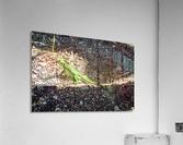 Cayman Young Green Iguana   Acrylic Print