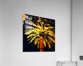 las vegas palm tree at night  Acrylic Print