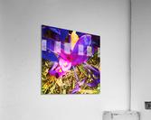 pink and purple  Acrylic Print
