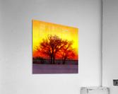 snowy evening  Acrylic Print