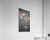 Etude Zen 8 c  Acrylic Print
