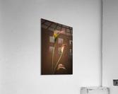 Etude Zen 8 d   Acrylic Print