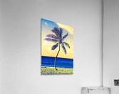 palm color 4  Acrylic Print