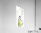 Aurore boreale 1  Acrylic Print