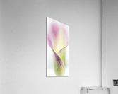Aurore boreale 3  Acrylic Print
