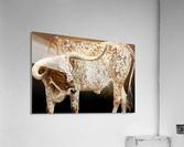 Longhorn Steer Profile 7x5  Acrylic Print