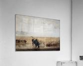 Buffalo watering  Acrylic Print