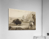 Hunters Escaping from a Wounded Buffalo, While He Tears Their Clothes to Pieces  Acrylic Print