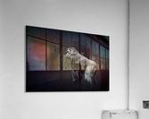 Silverback Gorilla Edit Edit  Acrylic Print