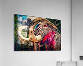 Wooly Mamoth  Acrylic Print