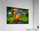 Ugly Bird  Acrylic Print