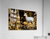 Fallow Deer 3  Acrylic Print