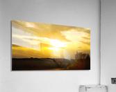 golden evening  Acrylic Print