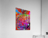 Baudi  Acrylic Print