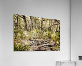 OCA 251  Acrylic Print
