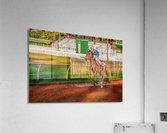 Racehorse02  Acrylic Print