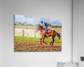 Racehorse06  Acrylic Print