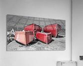 Red Dorries  Acrylic Print