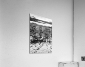 Cattails at Dawn  Acrylic Print