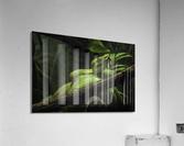 High Detail  Green Boa   Acrylic Print