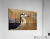 Shine Little Bird  Stilt   Acrylic Print