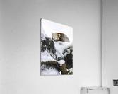 Red Panda  Acrylic Print