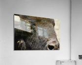 Reflection of a Buffalo  Acrylic Print
