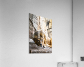Connection  Lion   Acrylic Print