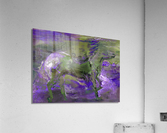 Ghost Rider - Violet  Acrylic Print